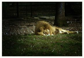 The Lion sleeps tonight by remousse