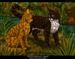Mothwing and Hawkfrost by Vialir