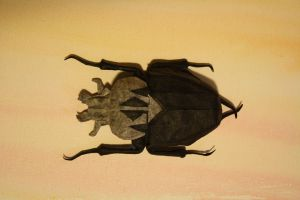 Goliath Beetle by JBarr4