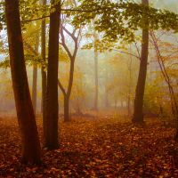 Colorful autumn by EliseEnchanted