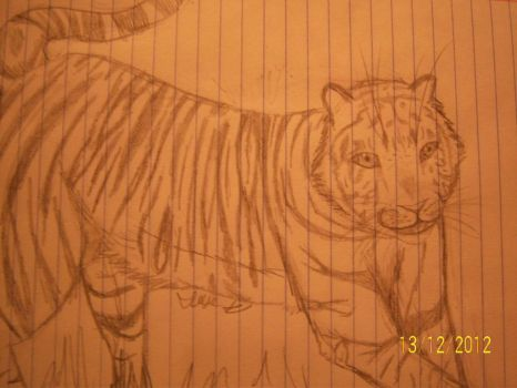 Tiger Drawing by TheDerpiestofHooves