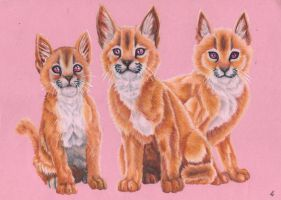 Caracal Kittens by Silver-Mercy