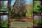 Springtime Forrest Path Stock by redwolf518stock