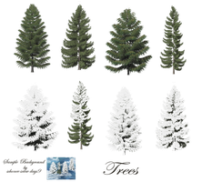 Pine Trees png stock