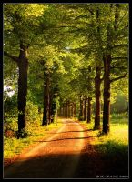 Morning Road... by hquer