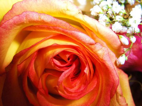 A rose by anyother name by spring-Rayne