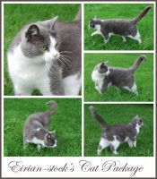 Cat Package by Eirian-stock