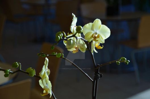CBG 2012 Orchid Show 4 by AmberPalette