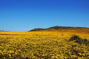 Valley of Yellow by AfricanObserver