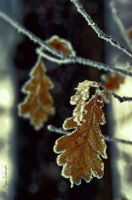 Frozen life. by Phototubby