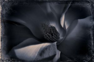 intimate III by vw1956