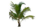 Palm Tree Tube Stock III PNG by digitaltwist