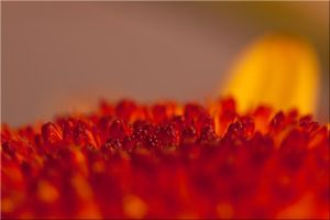Glowing Coals by dadian