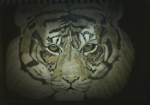 Tiger Pencil Coloured Drawing by ZeddiXTree