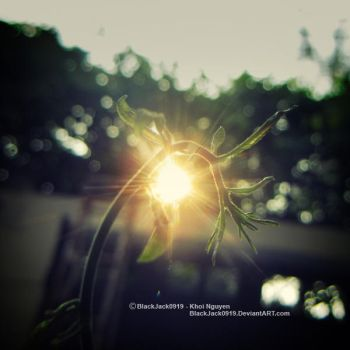 Photosynthesis by BlackJack0919