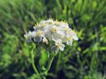 September by KarmensPhotos