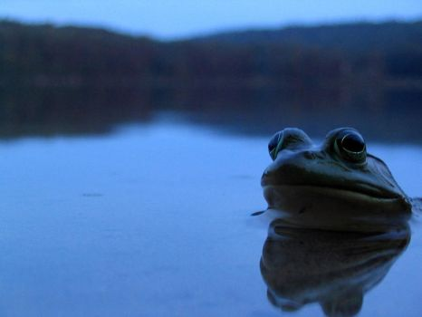Frog by counterevolutionary