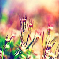 Colorful Grass by incolor16