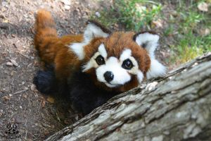 POseable toy commission: red panda by MalinaToys