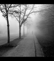 Fog by jfphotography