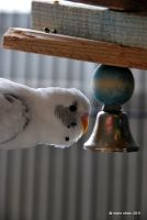 The name Hedwig ring a bell? by meihua
