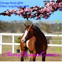 i got borde by Firgrove-Stables