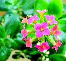 Green And Pink by turkmakro