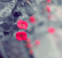 Red Polka Dots by Alessia-Izzo