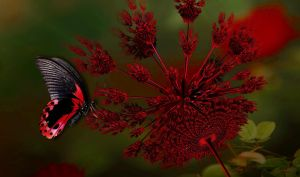 Scarlet Swallowtail Butterfly by marijeberting