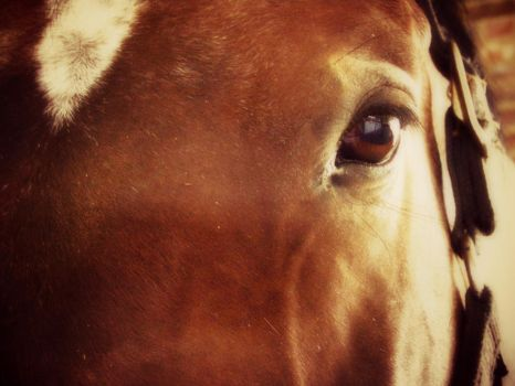 Through the Eyes Of The Mustang by The--Enchantress