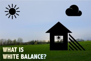 Everything about White Balance by sharq