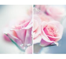 Pure as Roses... by onixa