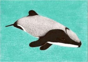 Day 14: Hector's Dolphin ACEO by whitetippedwaves
