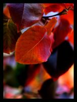 Fall Leaves by shutter-bug664