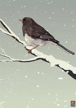 Junco - for Phoneix1785 by FionaCreates