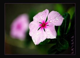 UR Smile And The Rain DropS .. by MeRanD