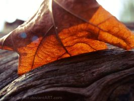 Autumn's Last by hourglass-paperboats