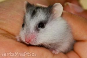 baby hamster by simply-syifa