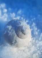 Winter, Yes. by Lilyas