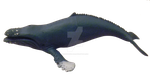 humpback whale png 1 by Irisustockimages