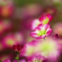| pink | by Somebody--else
