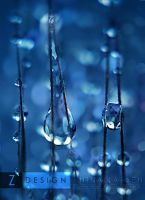 .:Morning Dew:. by ninazdesign