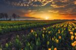 Springscape by Oer-Wout