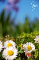 Flowers by geeson