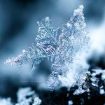 The Snowflake by nnIKOO