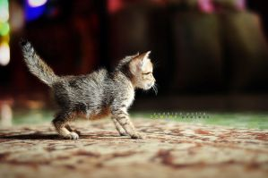 My Kitty.. by deMinegraphy
