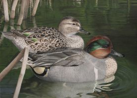 Green-winged Teals by ShaleseSands