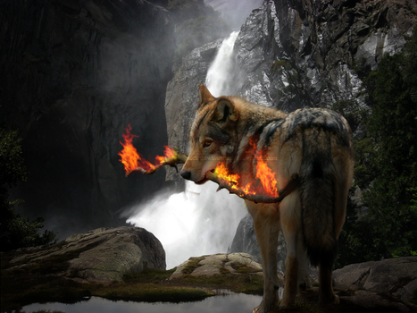 Fire and the wolf by SucicTheWhiteShadow