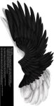 Dual Upright Wing - Black-White by Thy-Darkest-Hour