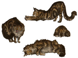 Maine Coons by Domnopalus
